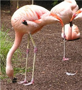 Foto: J.Folmer North Carolina Zoological Park juli 2003