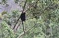 Chinnar Wildlife Sanctuary IMG 9072 (5).JPG