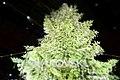 Christkindlmarkt - Swarovski crystal Christmas Tree at Zurich Train Station (Ank Kumar) 04.jpg