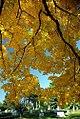 """Cincinnati - Spring Grove Cemetery & Arboretum """"Autumn Overlap"""" (8168117033).jpg"""