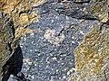 Clast-rich impact pseudotachylite (Sudbury Breccia, Paleoproterozoic, 1.85 Ga; Windy Lake Northwest roadcut, Sudbury Impact Structure, Ontario, Canada) 19 (47739477821).jpg