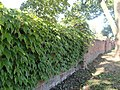 Cmentarz w Brwinowie - ogrodzenie 04.jpg