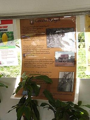 Cocoa panyols - Cocoa Panyols (Chart),Trinidad