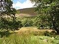 Coed yr Allt and Mynydd Rhiw-Saeson - geograph.org.uk - 519405.jpg
