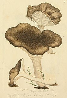 Coloured Figures of English Fungi or Mushrooms - t. 172.jpg