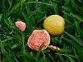 Common guavas.jpg