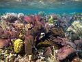 Coral Reefscape (5295750122).jpg