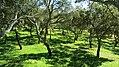 Cork forest near Sines Portugal.jpg
