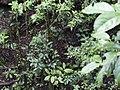 CostaRica (6164023817).jpg