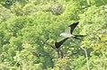 Costa Rica DSCN2145-new (31129932095).jpg
