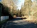 Country Lane through Oak Corner - geograph.org.uk - 130834.jpg