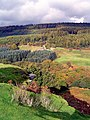 Cropton Forest - geograph.org.uk - 173217.jpg