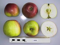 Cross section of Dodd, National Fruit Collection (acc. 1975-011).jpg