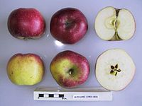 Cross section of Murasaki, National Fruit Collection (acc. 1953-003).jpg