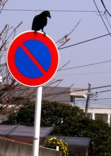 Crow on the sign of no parking.jpg