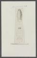 Cymothoa trigonocephala - - Print - Iconographia Zoologica - Special Collections University of Amsterdam - UBAINV0274 098 11 0005.tif