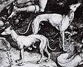 Dürer Cropped.jpg