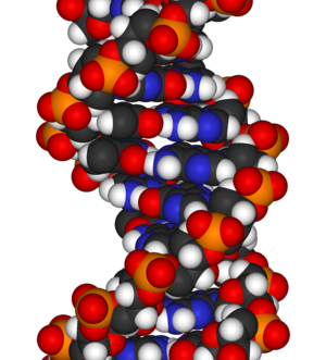 A fragment of DNA, the chemical sequence that ...