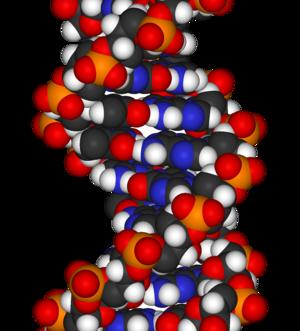 image of DNA-fragment-3D-vdW