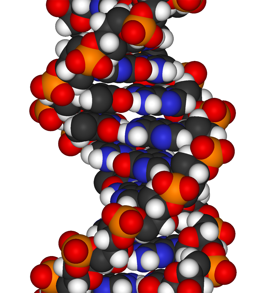 DNA-fragment-3D-vdW