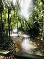 Daintree National Park river crossing.jpg