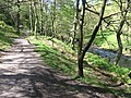 Dane Valley Way in Forest Wood - geograph.org.uk - 1298890.jpg