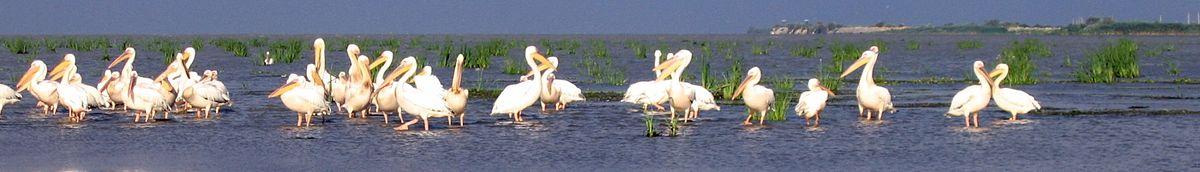 Danube delta in Vylkove
