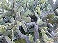 Day trip to the Botanical Gardens - panoramio (39).jpg