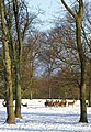 Deer in the park - geograph.org.uk - 1626467.jpg