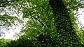 Denmark - Copenhaguen, Botanisk Haves - panoramio (9).jpg