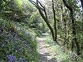 Deptford Wood - geograph.org.uk - 1530709.jpg