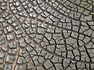 Sewage sludge - Desiccation cracks in dried sludge, the hard final remains from a sewage plant.