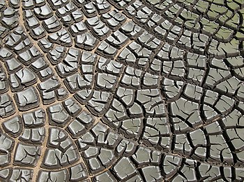 Desiccation-cracks hg.jpg