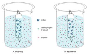 Dialysis (biochemistry) - Small-molecule dialysis using dialysis tubing