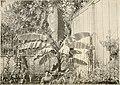 Die Gartenwelt (1897) (14771924055).jpg