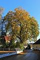 Die Sommerlinde in Dietmannsdorf 02 2014-10 NDM HO-091.jpg