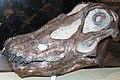 Diplodocus longus Chicago.jpg