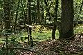 Dornburg Celtic Oppidum Stone pile.jpg