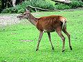 Dortmund-Zoo-IMG 5484-a.jpg