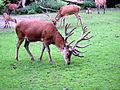 Dortmund-Zoo-IMG 5515-a.jpg