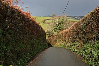 Cornish hedge - Lane in St Dominic with high hedges