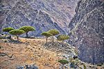 Dragon's Blood Trees, Socotra Island (12455632274).jpg