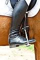 Dressage boot.jpg