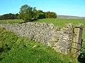Drystone Wall - geograph.org.uk - 1539809.jpg