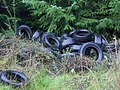 Dumped Tyres in the Forest - geograph.org.uk - 267866.jpg