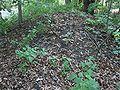 Edgewood College Mound Group.jpg