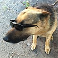 El perro (11164664973).jpg