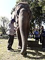 Elephant20171111 122117.jpg