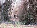 Elephant @ Wayanad wildlife Sanctuary - panoramio.jpg