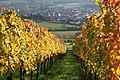 Ellmendingen Blick durch die Weinberge - panoramio.jpg